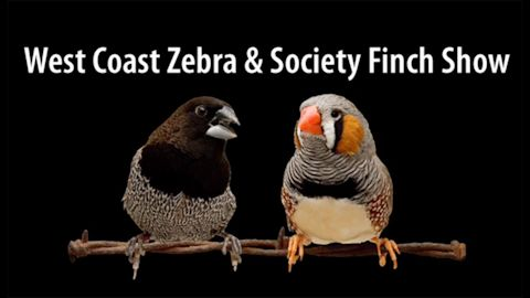 West Coast Zebra & Society Finch Show ~ CA