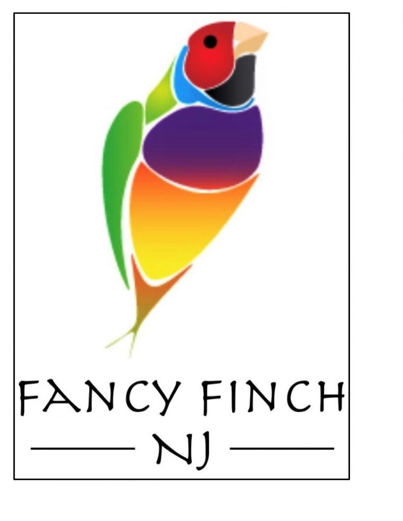 Fancy Finch- New Jersey – 2.11.17