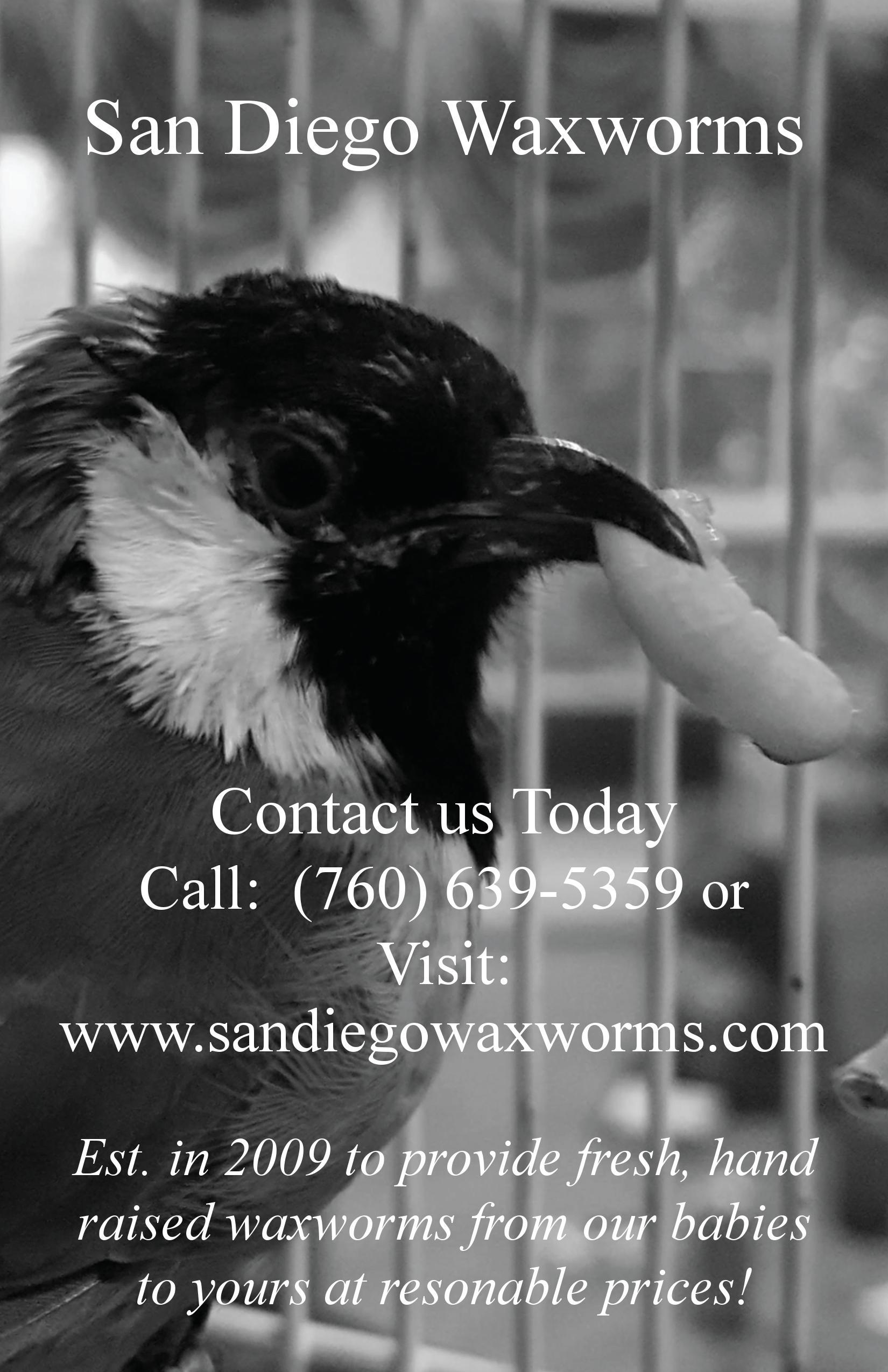 San Diego Waxworms